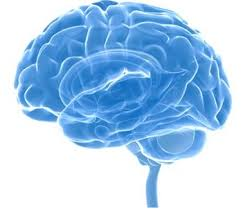Neurocyclin – sastav – test - sastojci